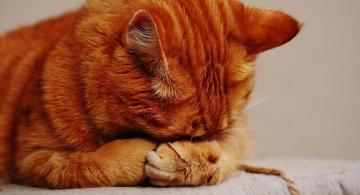 Cele mai periculoase alimente pentru pisici