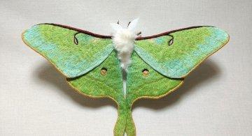 Gingasia fluturilor crosetati, cu Yumi Okita