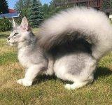 13 exemple de pisici cu infatisare atipica