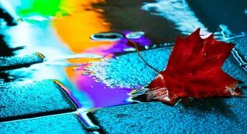 Nuantele picaturilor de ploaie, in poze fermecatoare