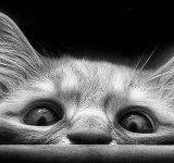 Viata de pisica, in poze adorabile