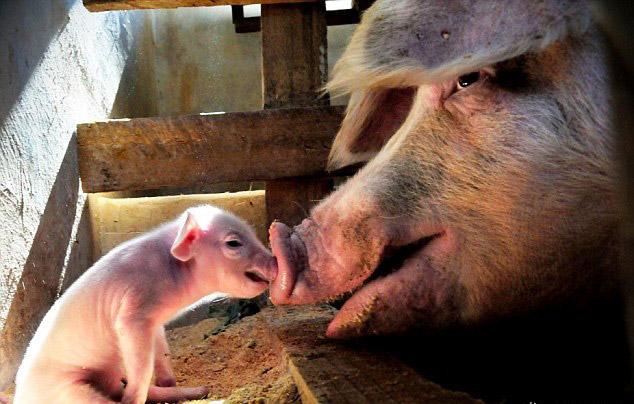 Cand animalele se iubesc: 40 poze superbe - Poza 1