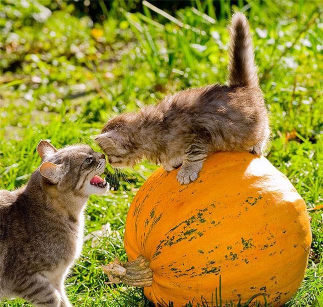 Cand animalele se iubesc: 40 poze superbe - Poza 12