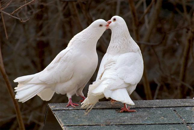 Cand animalele se iubesc: 40 poze superbe - Poza 14
