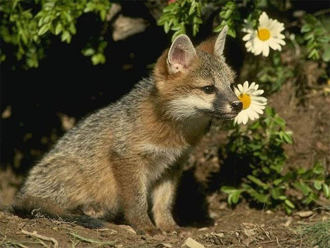 75 de fotografi cu animalute superbe
