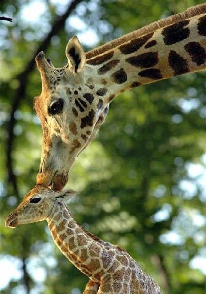 Cand animalele se iubesc: 40 poze superbe - Poza 16