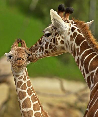 Cand animalele se iubesc: 40 poze superbe - Poza 17