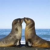 Cand animalele se iubesc: 40 poze superbe - Poza 21