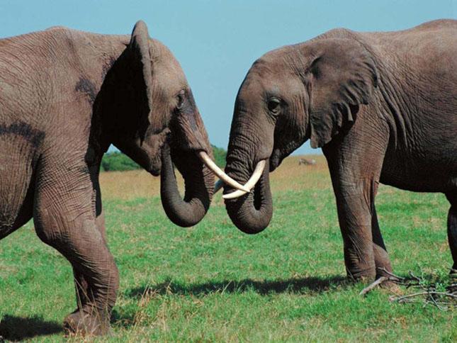 Cand animalele se iubesc: 40 poze superbe - Poza 22