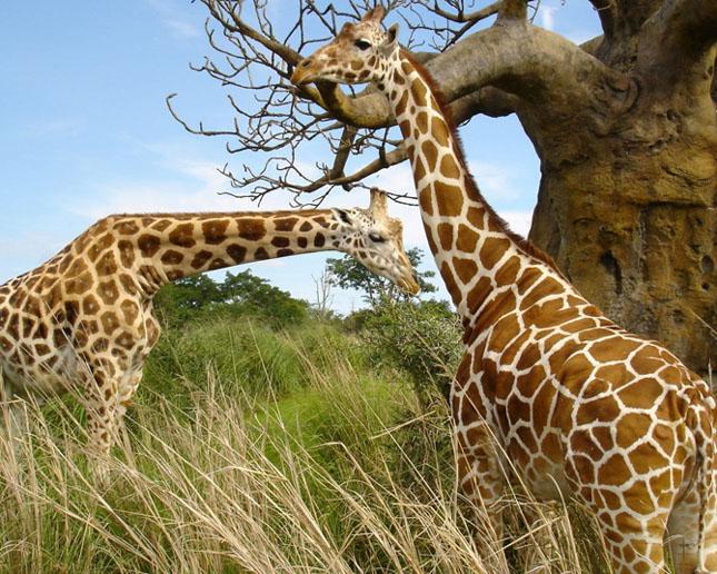 Cand animalele se iubesc: 40 poze superbe - Poza 23