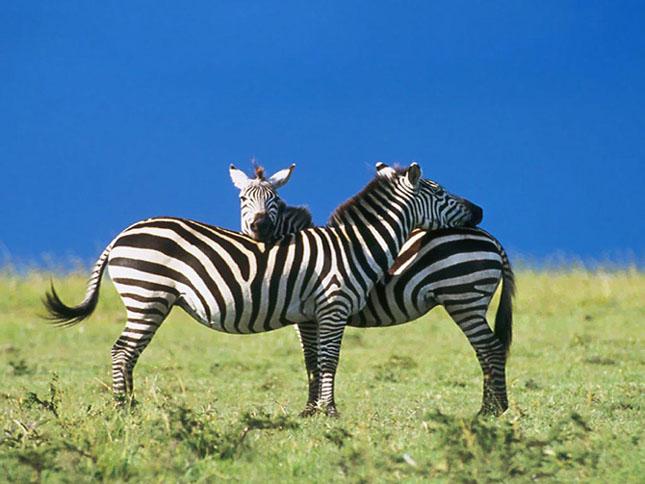 Cand animalele se iubesc: 40 poze superbe - Poza 24