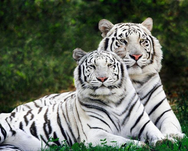 Cand animalele se iubesc: 40 poze superbe - Poza 27