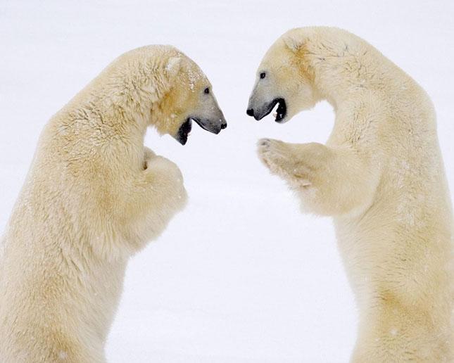 Cand animalele se iubesc: 40 poze superbe - Poza 29