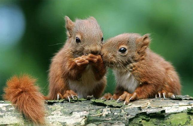 Cand animalele se iubesc: 40 poze superbe - Poza 3