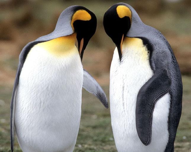 Cand animalele se iubesc: 40 poze superbe - Poza 30