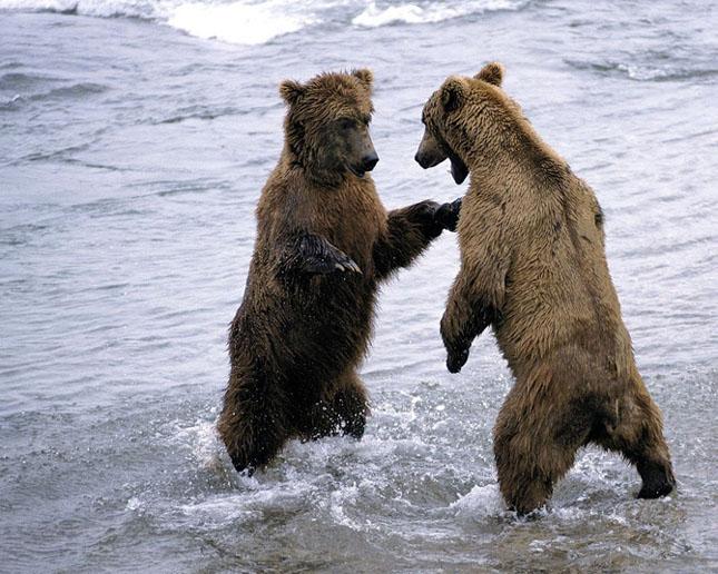 Cand animalele se iubesc: 40 poze superbe - Poza 32