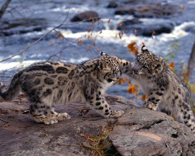 Cand animalele se iubesc: 40 poze superbe - Poza 33