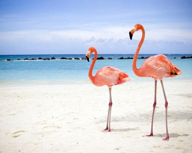 Cand animalele se iubesc: 40 poze superbe - Poza 34