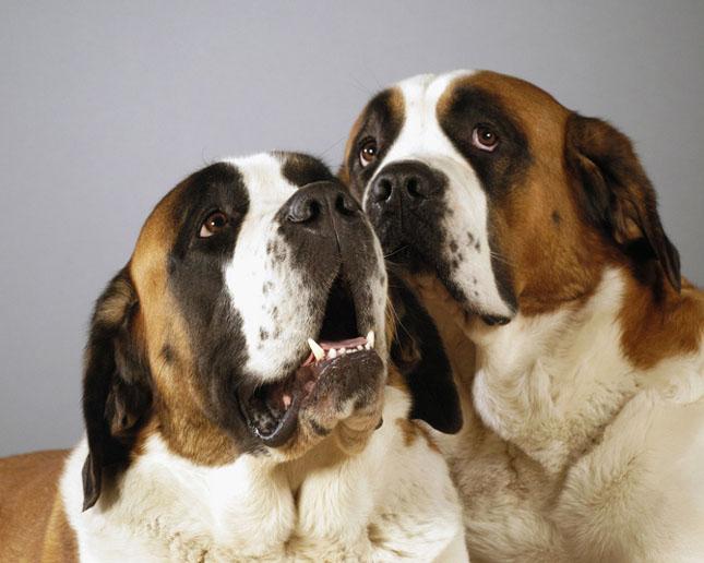 Cand animalele se iubesc: 40 poze superbe - Poza 35