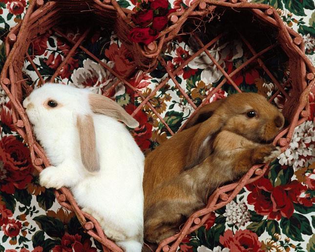 Cand animalele se iubesc: 40 poze superbe - Poza 36