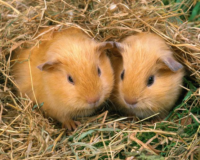 Cand animalele se iubesc: 40 poze superbe - Poza 37