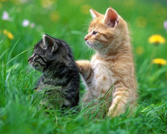 Cand animalele se iubesc: 40 poze superbe - Poza 38