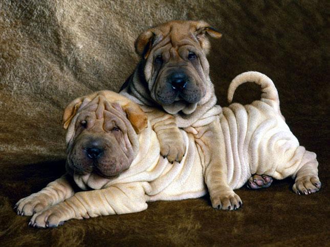Cand animalele se iubesc: 40 poze superbe - Poza 39