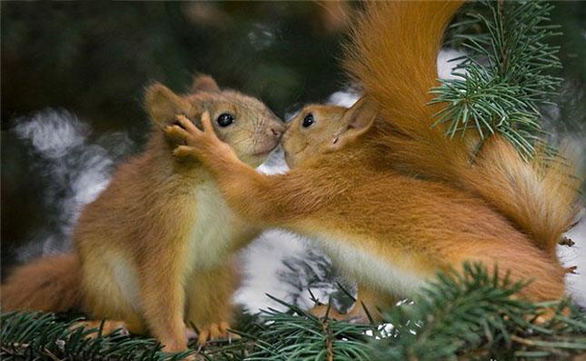 Cand animalele se iubesc: 40 poze superbe - Poza 4