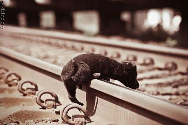 75 de fotografii cu animalute superbe