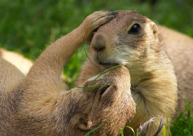 Cand animalele se iubesc: 40 poze superbe - Poza 5
