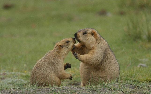 Cand animalele se iubesc: 40 poze superbe - Poza 6
