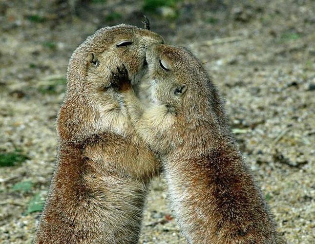 Cand animalele se iubesc: 40 poze superbe - Poza 7