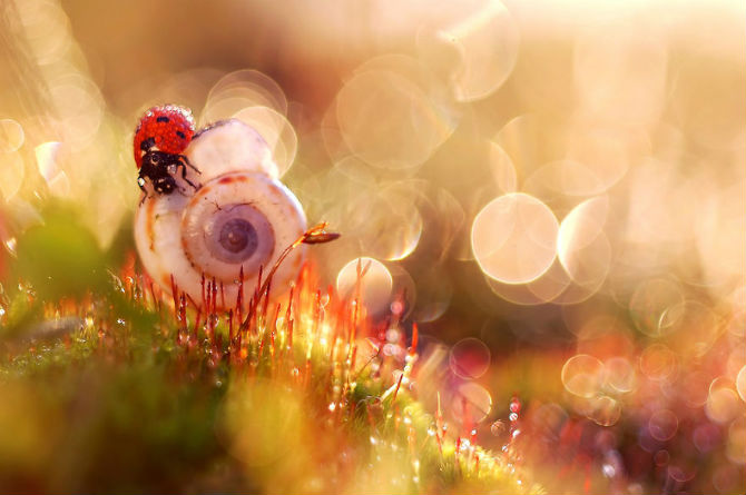 Lumea de basm a insectelor, in fotografii macro - Poza 1