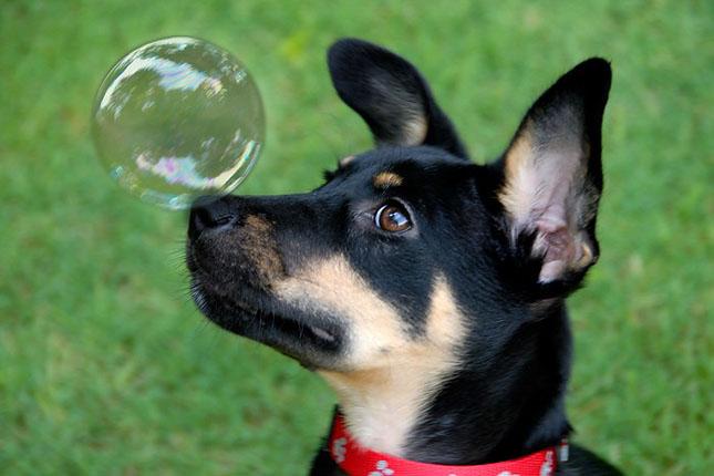 17 poze cu animale fericite - Poza 1