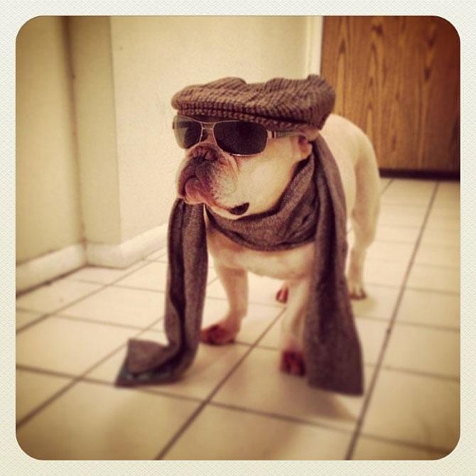 10 bulldogi cu multa personalitate - Poza 7