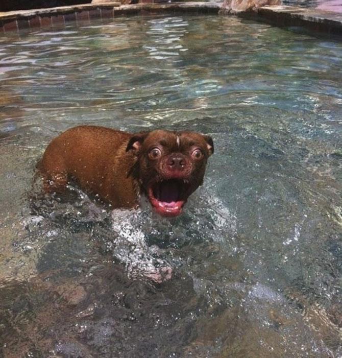 10 caini mult prea entuziasmati - Poza 1