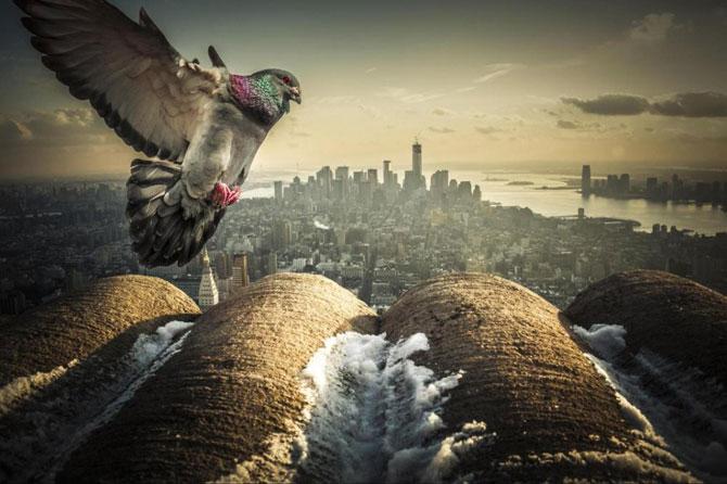 10 fotografii incredibile din New York - Poza 1
