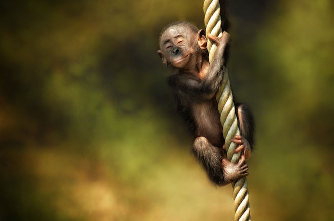 Expresivitatea maimutelor in 10 fotografii - Poza 2