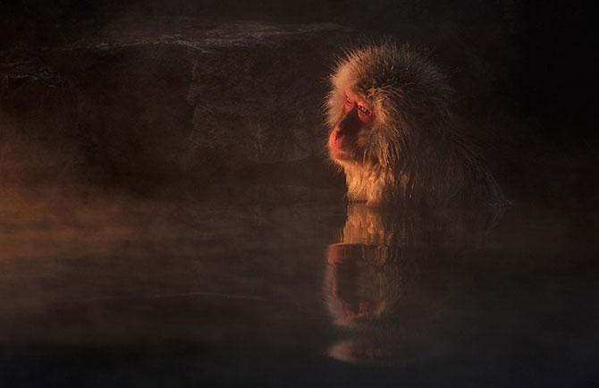 Expresivitatea maimutelor in 10 fotografii - Poza 3