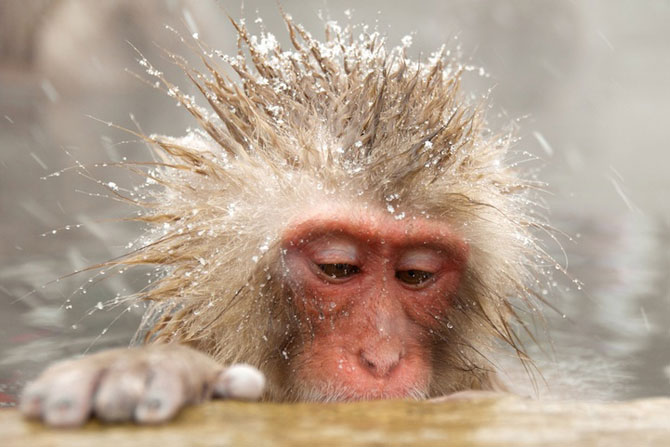 Expresivitatea maimutelor in 10 fotografii - Poza 4