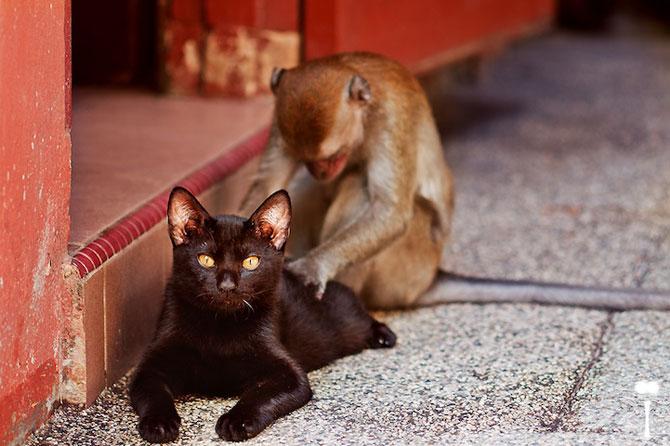 Expresivitatea maimutelor in 10 fotografii - Poza 9