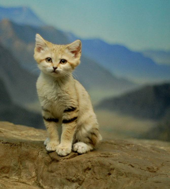 10 pui adorabili de animale - Poza 1