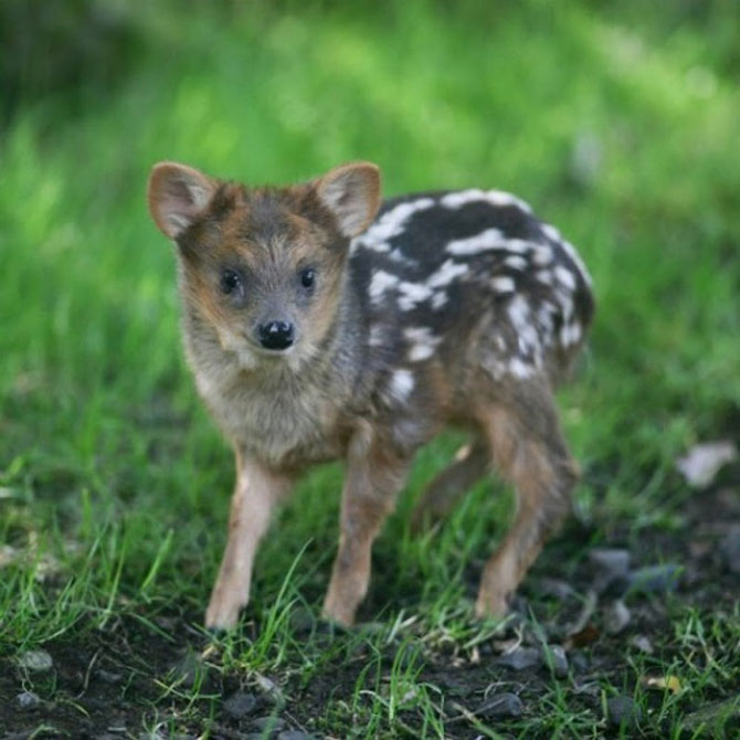 10 pui adorabili de animale - Poza 4