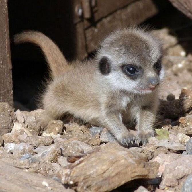 10 pui adorabili de animale - Poza 10