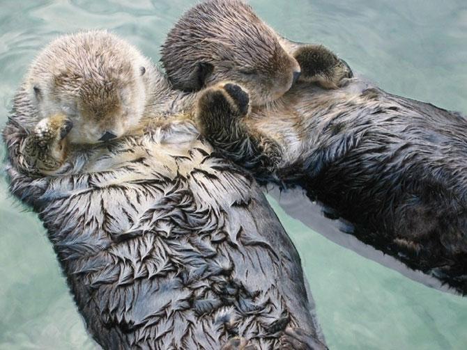10 lucruri adorabile despre animale - Poza 1