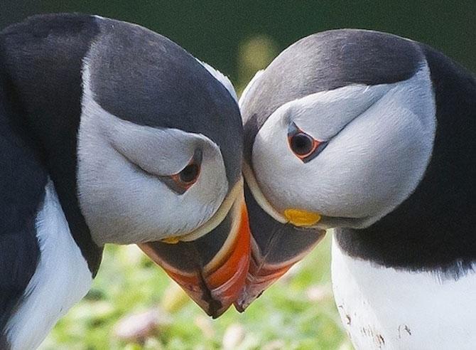 10 lucruri adorabile despre animale - Poza 4