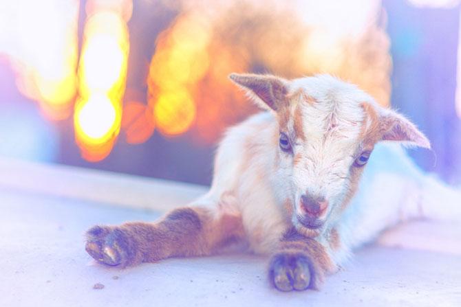 10 lucruri adorabile despre animale - Poza 5