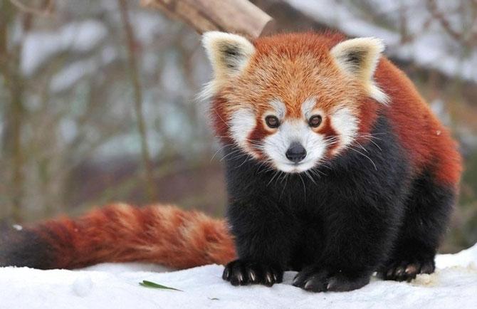 10 lucruri adorabile despre animale - Poza 7