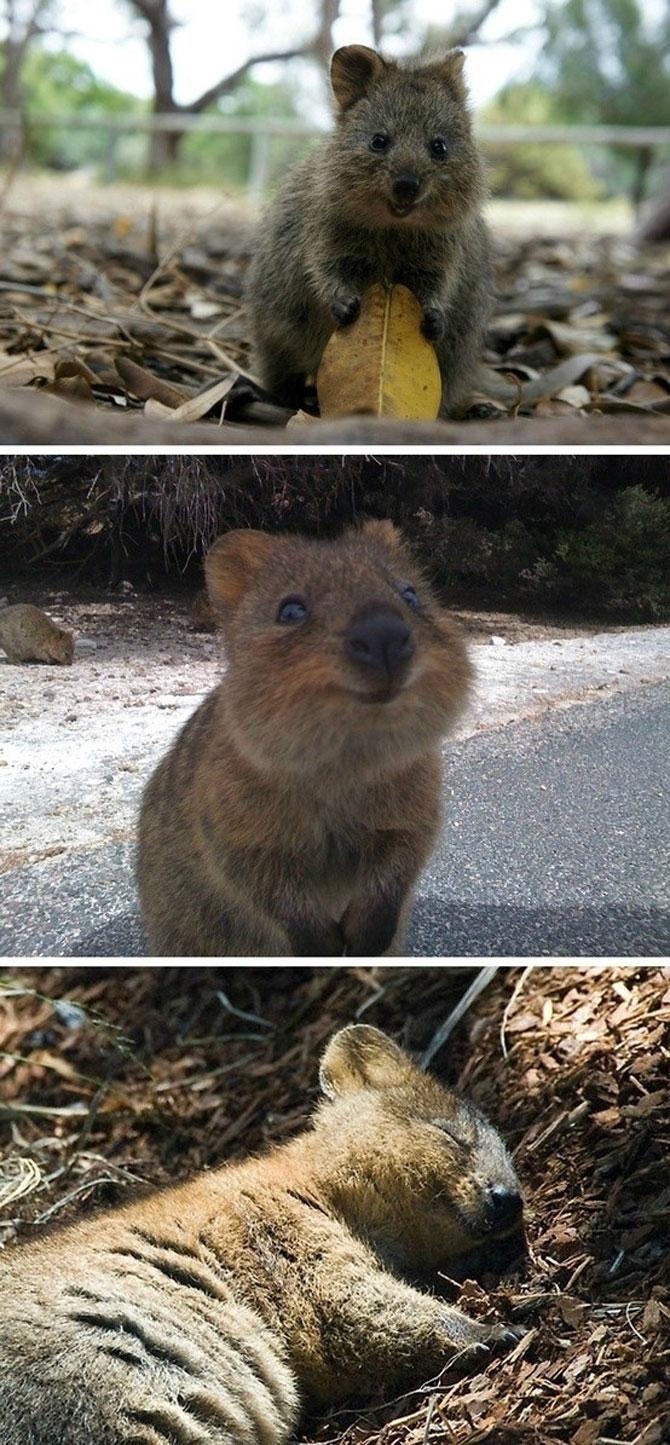 10 lucruri adorabile despre animale - Poza 8