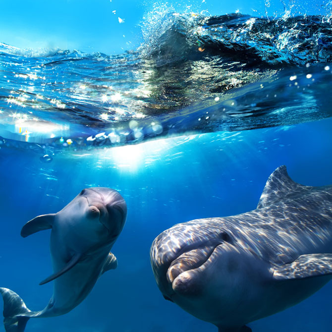 10 lucruri adorabile despre animale - Poza 9